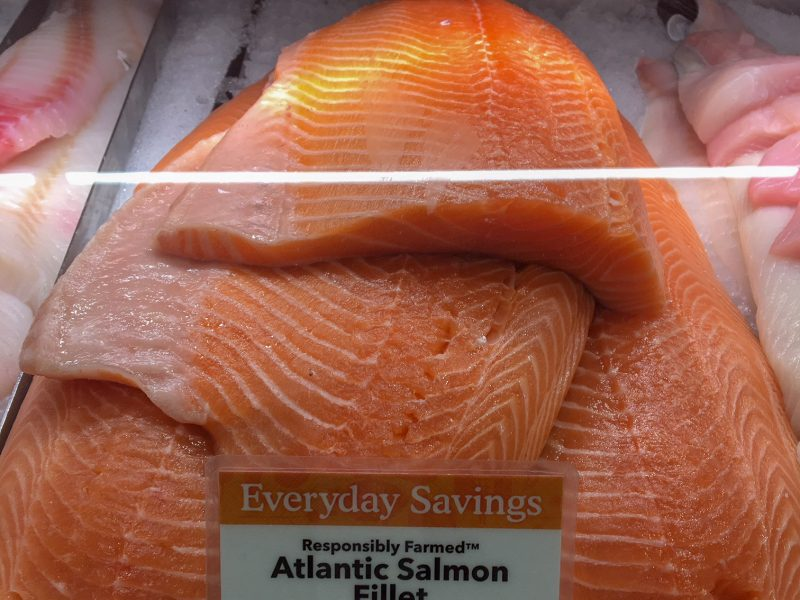 farm-raised Atlantic salmon