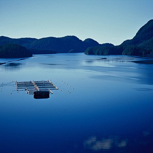 sustainable aquaculture industry